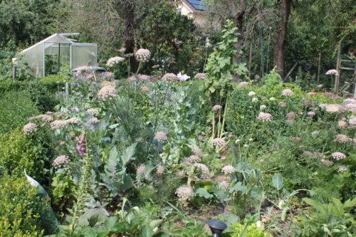 Permakultur - erfolgreiches Gärtnern @ Dorf-Gemeinschafts-Garten Bolzum